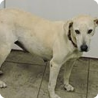 Adopt A Pet :: Zelda - Cottonport, LA