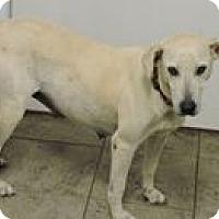 Labrador Retriever/Retriever (Unknown Type) Mix Dog for adoption in Cottonport, Louisiana - Zelda