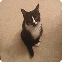 Adopt A Pet :: Snicker Doodle - Covington, KY