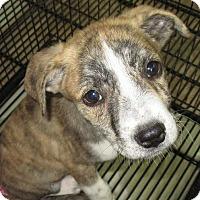Adopt A Pet :: Duke - Clear Lake, IA