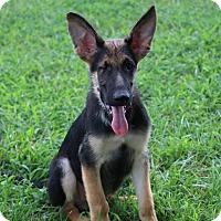 Adopt A Pet :: Mason - Greeneville, TN