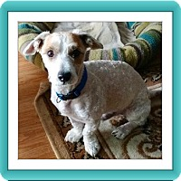 Adopt A Pet :: Dickens - IL - Tulsa, OK