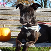 Adopt A Pet :: Dory - Bucyrus, OH