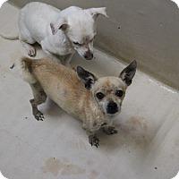 Adopt A Pet :: A36 Oliver - Odessa, TX