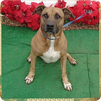 Adopt A Pet :: RICHARD- avail 12/10 - Marietta, GA