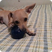 Adopt A Pet :: Peety - Thousand Oaks, CA