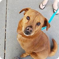 Adopt A Pet :: Maisie - Alpharetta, GA