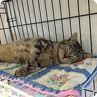 Adopt A Pet :: dennis - Lunenburg, MA