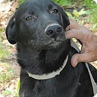 Adopt A Pet :: Lakota - Staunton, VA