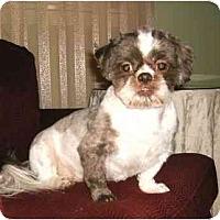 Adopt A Pet :: Zeke - Mooy, AL