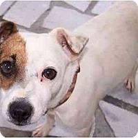 Adopt A Pet :: Sugar - Honaker, VA