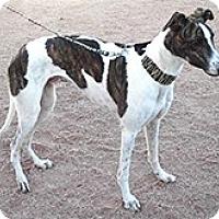 Adopt A Pet :: Sinner (Sven) - Cottonwood, AZ