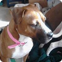 Adopt A Pet :: Daisey - Cleveland, OH