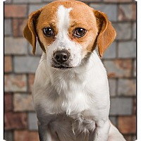 Adopt A Pet :: Legion - Owensboro, KY