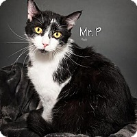 Adopt A Pet :: Mr. P. 5309 - Fort Mill, SC