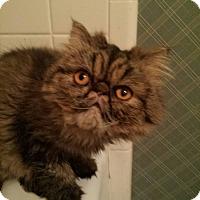 Adopt A Pet :: Tesla - Columbus, OH