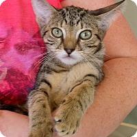 Adopt A Pet :: Linguini & Alfredo - Island Park, NY