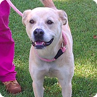 Adopt A Pet :: Annabelle - Metamora, IN