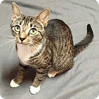 Adopt A Pet :: Banshee - Merrifield, VA