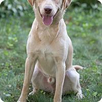Adopt A Pet :: Mumford - Drumbo, ON