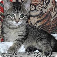 Adopt A Pet :: ZIANI - Harrisburg, PA