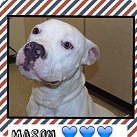 Adopt A Pet :: Mason reduced! (Pom-Christi) - Harrisonburg, VA