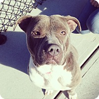 Adopt A Pet :: Jett - Atlanta, GA