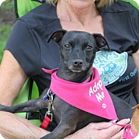 Adopt A Pet :: Allie (and her bestie Holly) - Studio City, CA