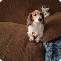 Adopt A Pet :: Lucky - Las Vegas, NV