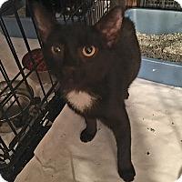 Adopt A Pet :: Chloe - Bronx, NY