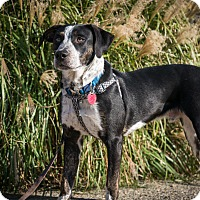 Adopt A Pet :: Tim - Bardonia, NY