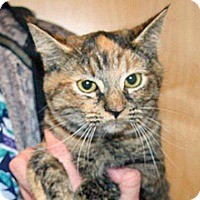 Adopt A Pet :: Natalie - Wildomar, CA