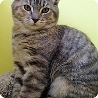 Adopt A Pet :: Lux - Fairfax, VA