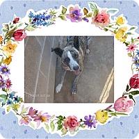 Adopt A Pet :: JAZZ - KELLYVILLE, OK