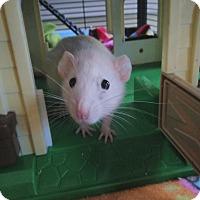 Adopt A Pet :: Ally - Columbia, SC
