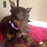 Adopt A Pet :: Reba - Maricopa, AZ