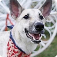 Adopt A Pet :: Sunnee - Richmond, BC