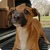 Adopt A Pet :: Roosevelt - Sunnyvale, CA