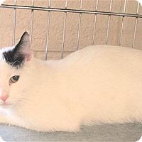 Adopt A Pet :: Louie - Euclid, OH