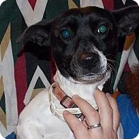 Adopt A Pet :: Emma - Billerica, MA