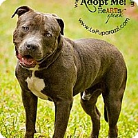 Adopt A Pet :: Bambino - Orlando, FL