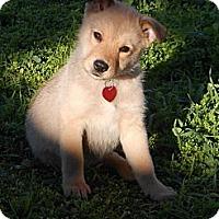 Adopt A Pet :: WIGGLES - Torrance, CA