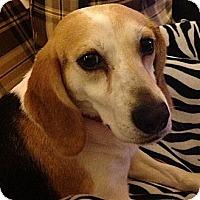Adopt A Pet :: Gretchen - Novi, MI
