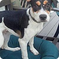 Adopt A Pet :: Nivea - bloomfield, NJ