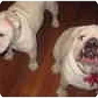 Adopt A Pet :: Lexi and Sadie - conyers, GA