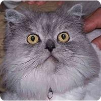 Adopt A Pet :: Festus - Davis, CA