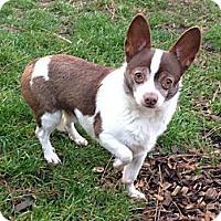 Adopt A Pet :: Cha Cha - Salem, OR