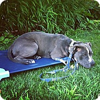 Adopt A Pet :: Debo - Providence, RI