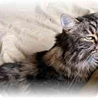 Adopt A Pet :: Andie - Irvine, CA