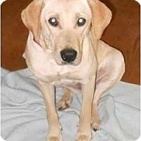 Adopt A Pet :: Beylea - Cumming, GA